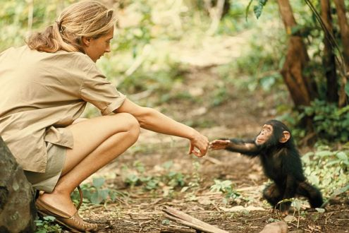 Jane Goodhall