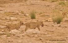 Etosha National Park